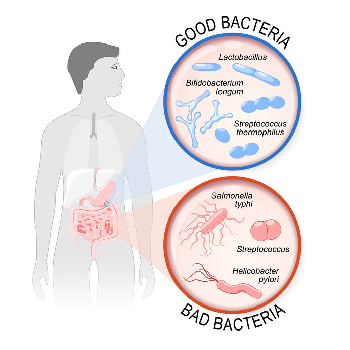 probiotics on empty stomach | Probiotic America